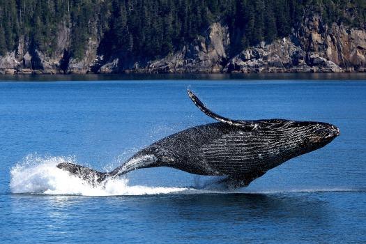 whale-3694489_1920